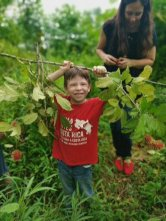 Benny harvesting Mamones. This sweet fruit is a favorite!
