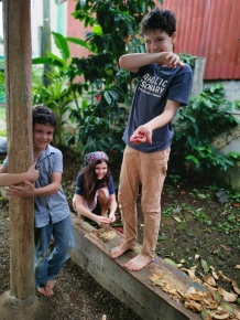 The kids harvesting coffee beans from our tree